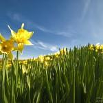 4536485_dzien-dobry-wiosno-