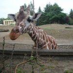 wroclaw-zoo-afrykarium